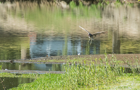 Birding-3177