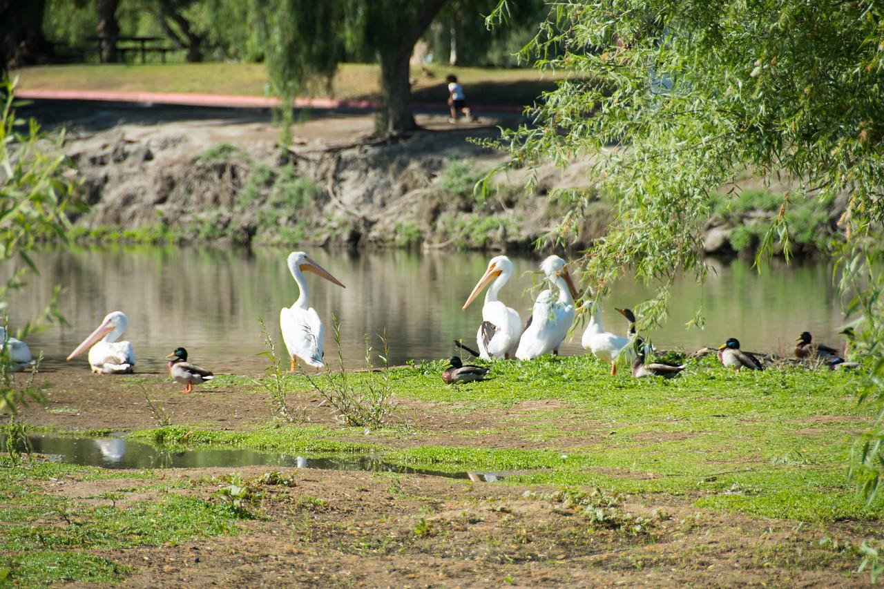 Birding-3161
