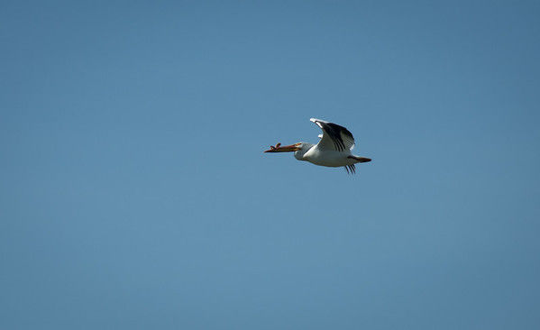 Birding-3139