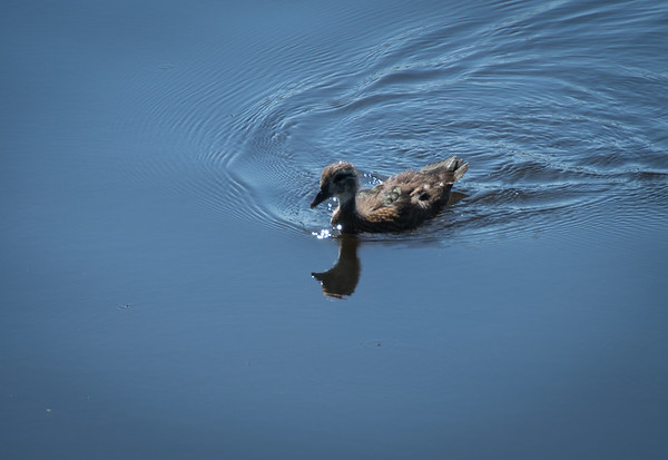 Birding-3257