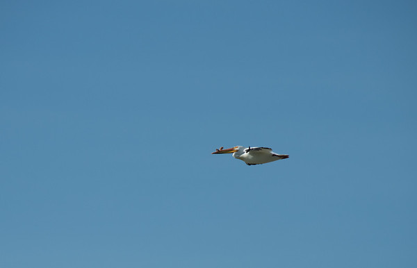 Birding-3138