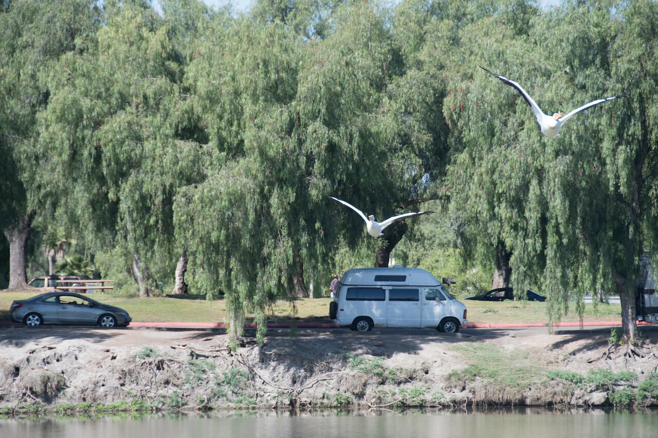 Birding-3236