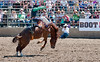 Lakeside_Rodeo_2011-6412
