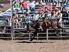 Lakeside_Rodeo_2011-6536