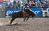 Lakeside_Rodeo_2011-6614
