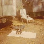 1966c Dog Camping