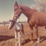 1966c Horses