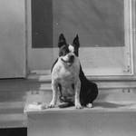 1968c Dog