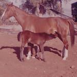 1964c Horse & Colt (Adjusted)