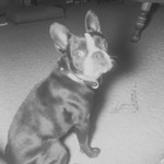1969c Dog