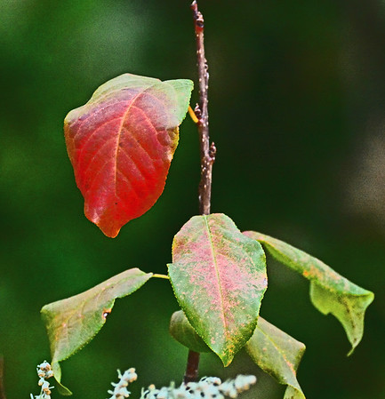 Rooks Park: Early Fall Colors, 8-26-16