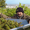"""About Vineyards and Winemaking at the """"Nußberg"""" in Vienna, Austria"""