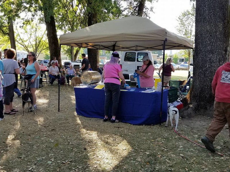 . Photos by Aura Whittaker. Visitors at the Roots of Motive Festival 2017 in Willits.