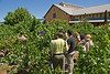 In the Valley Of The Moon Estate Zinfandel vineyard