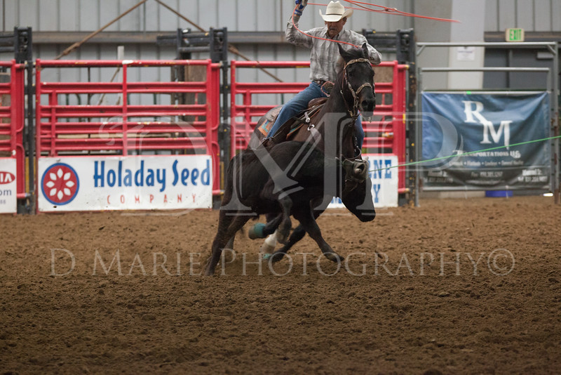 World Series of Team Roping - dmariephotography