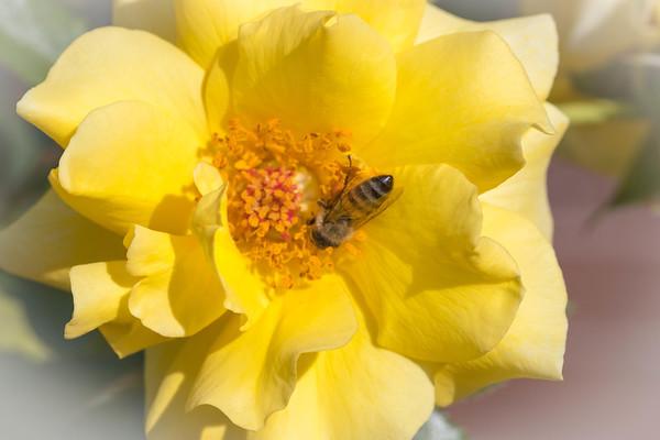 Rose Garden Balboa Park