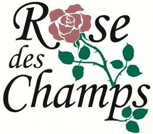 Rose des Champs