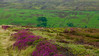 North York Moors NP - na ceste nad Kildale
