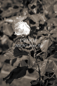 22. 2024-5 Above All Rose in Black and White