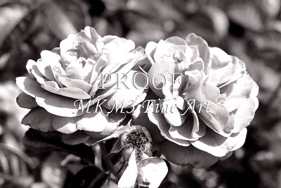 21. 2025-1 Bordeaux Rose in Black and White