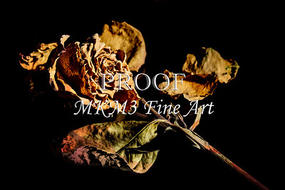 Color Faded Love Dead Rose Wall Art 6014.02