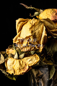 Say Good By Yellow Dead Roses Faded Love 6014.02