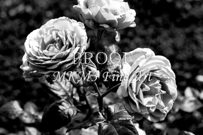 20. 2025-3 Heirloom Rose in Black and White