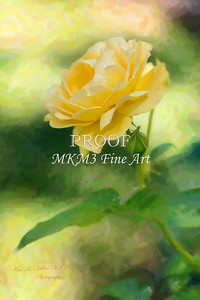 05.2029-6 Julia Child Yellow Rose in Digital Painiting