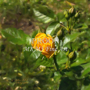 02.2029-6 Julia Child Yellow Rose in Digital Painiting