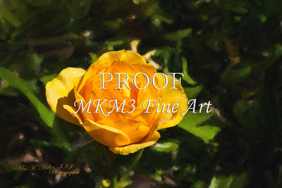 04.2029-6 Julia Child Yellow Rose in Digital Painiting