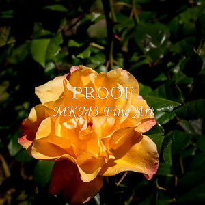 08.2021-2 Moonlight Rose in Color