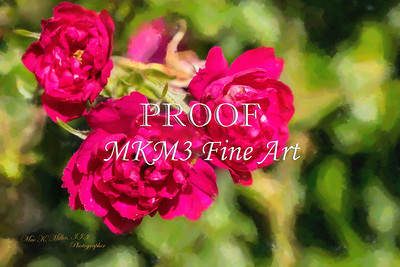 01.2030-1 Pink Grootendorst Rose in Digital Painting