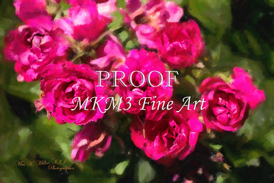 08.2030-1 Pink Grootendorst Rose in Digital Painting