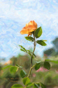 03. 2028-5 Queen of Sweden Rose in Digital Painting