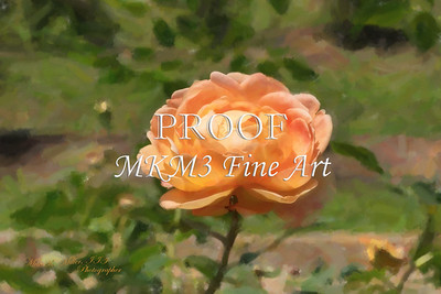 04. 2028-5 Queen of Sweden Rose in Digital Painting