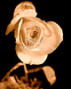 Sepia Antique Rose 061902