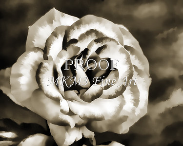 Rose flower Painting in Sepia 3182.01