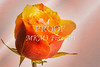 Orange Rose Canvas Wal Art 1625.577