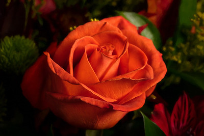 01.1957 Orange Rose Art Photograph