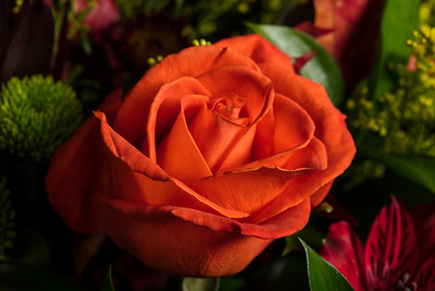 04.1957 Orange Rose Art Photograph