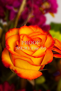 Pictures of Flower Arrangements Fine Art Photograph Prints 3825.02