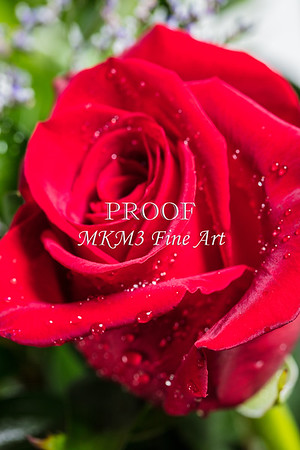 Red Rose Wall Art 1805.15