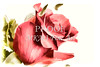 Rose flower Painting Red Roe Picture 3187.02