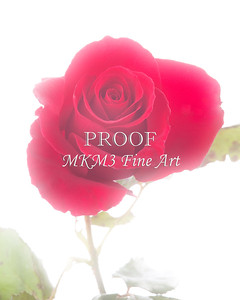 Red Rose Picture on White Fog 28