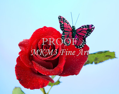 Rose Red Butterfly on Blue Wall Art 2837h