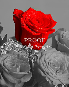 Standout Red Rose Picture 1110.09