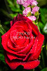 Red Rose Spring PIcture Wall Art 1803.10