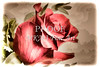 Single Red Rose Picture 3183.02