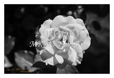 20.2029-7 Take It Easy Rose in Black and White