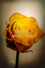 Wall Art Yellow Rose Image 1625.03